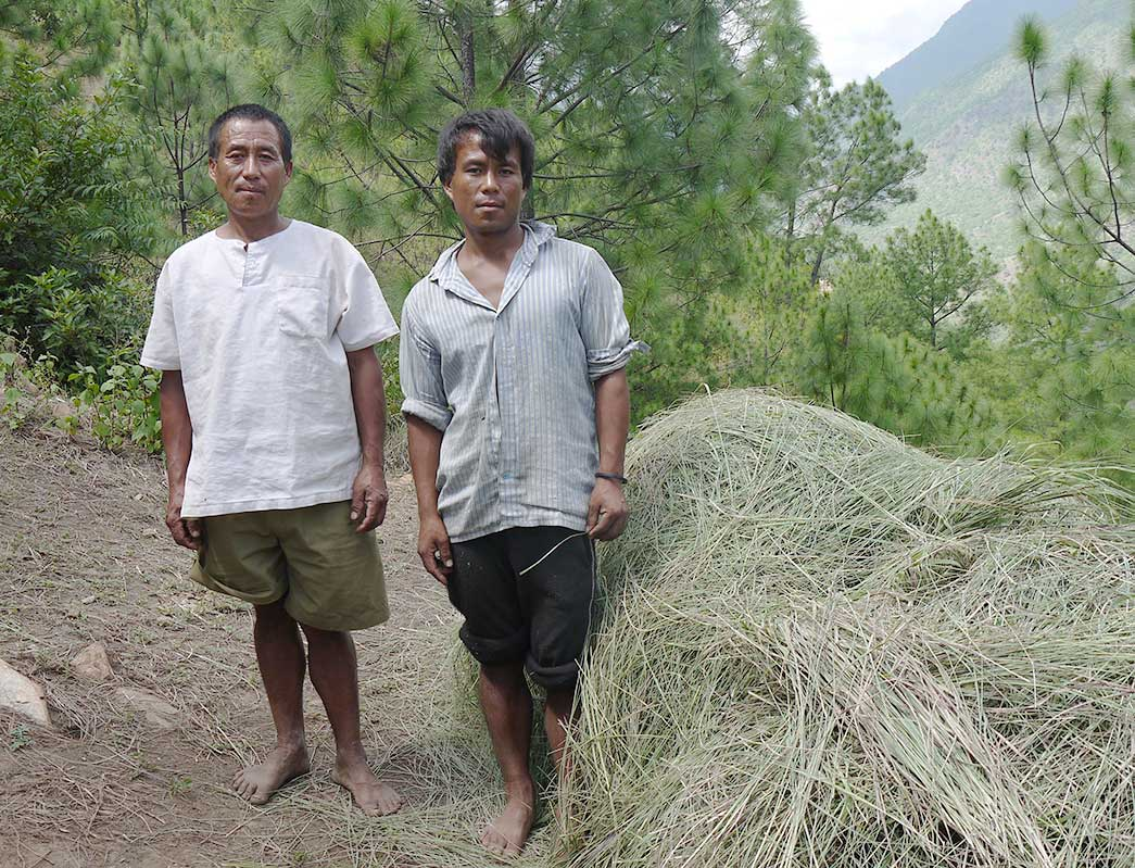 Der høstes Citrongræs i Bhutan